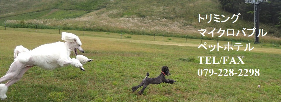 トリミング・マイクロバスバブル・ペットホテル・犬用車椅子製作・老犬介護用カートの製作はペットランドすまいる!